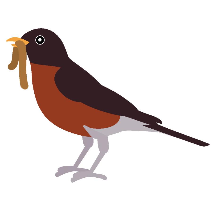Birds clipart red robin. European bird american clip