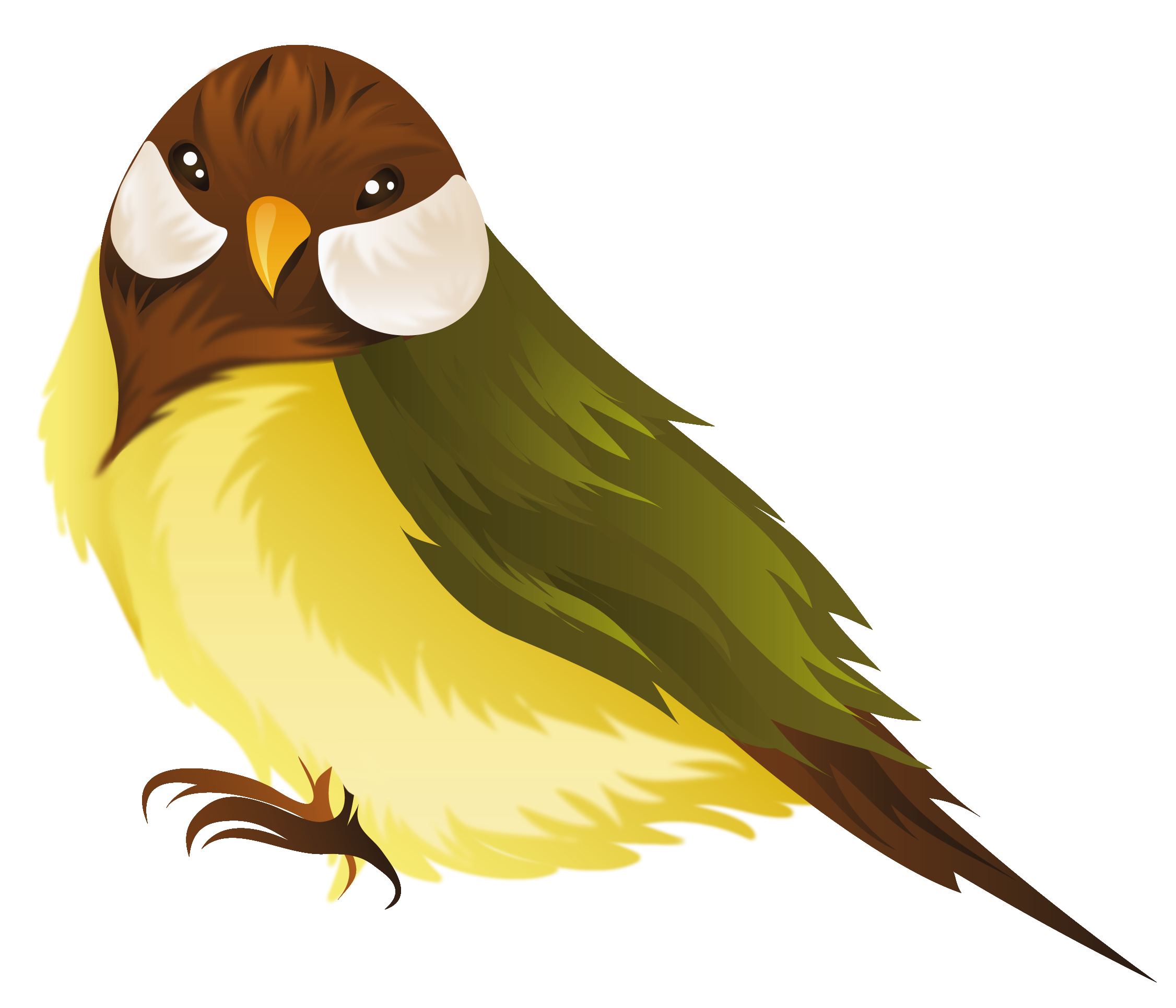 Png image gallery yopriceville. Bird clipart transparent background
