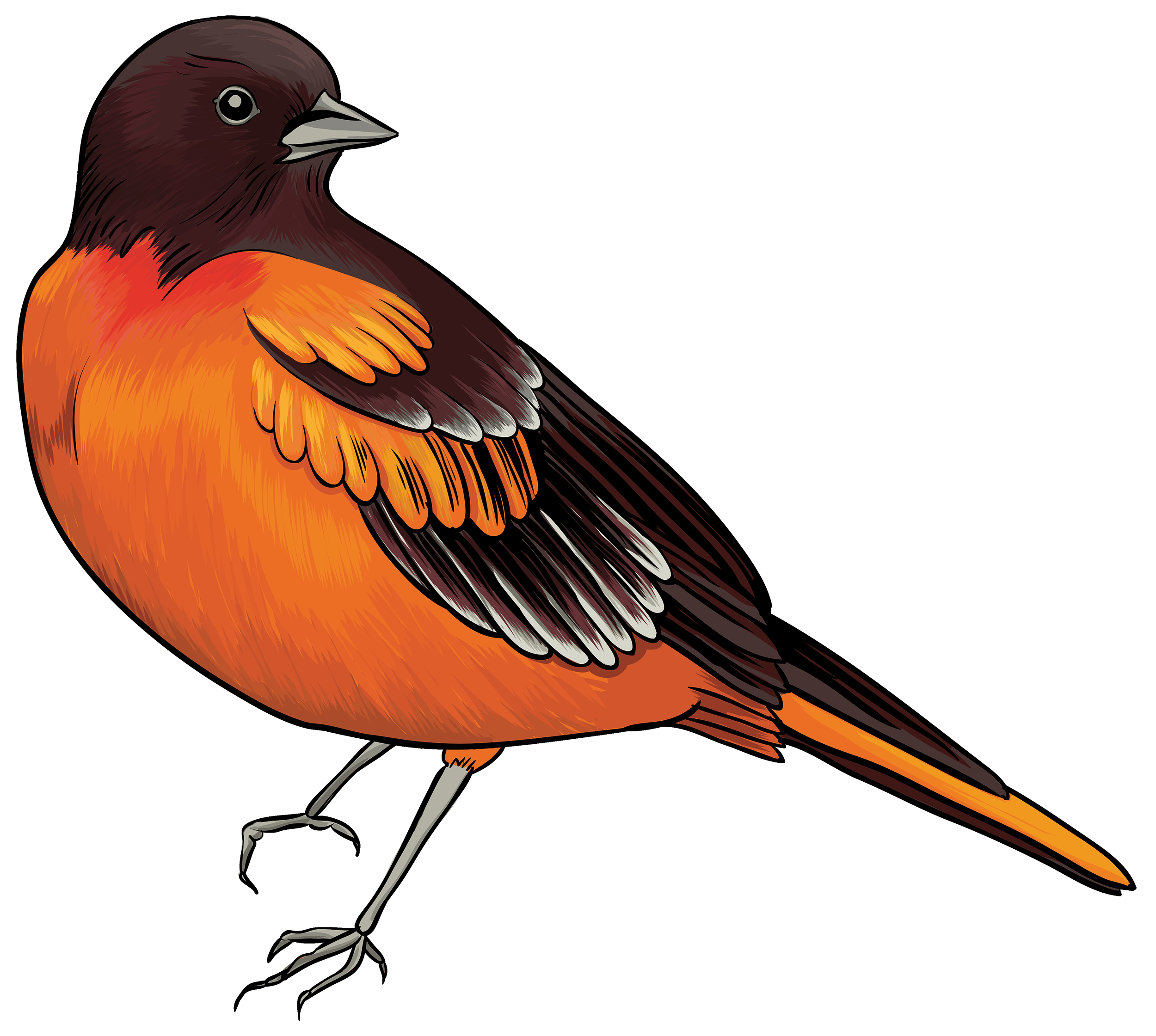 Black and orange bird. D20 clipart stylized
