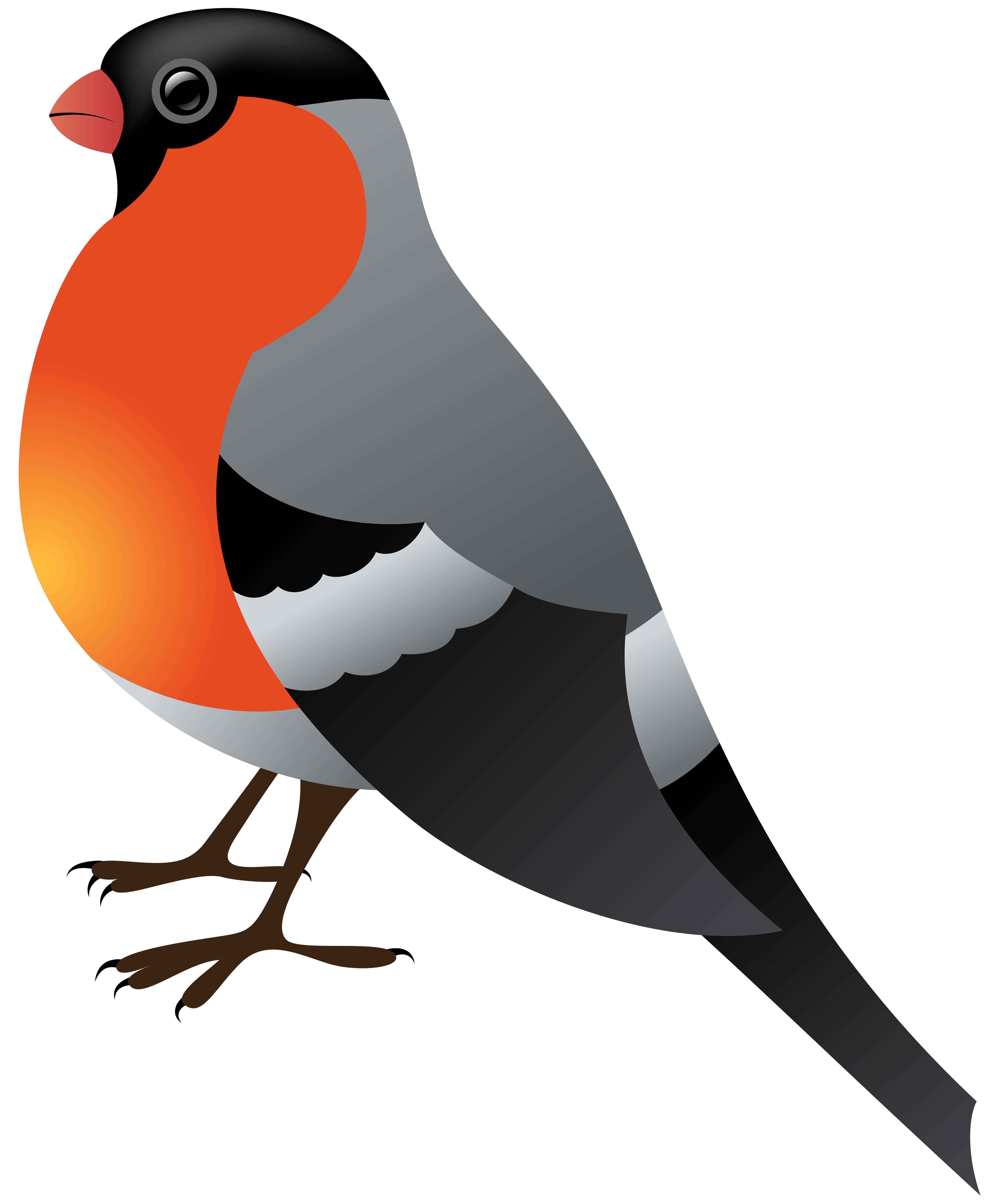 Birds clipart transparent background. Winter bird png clip
