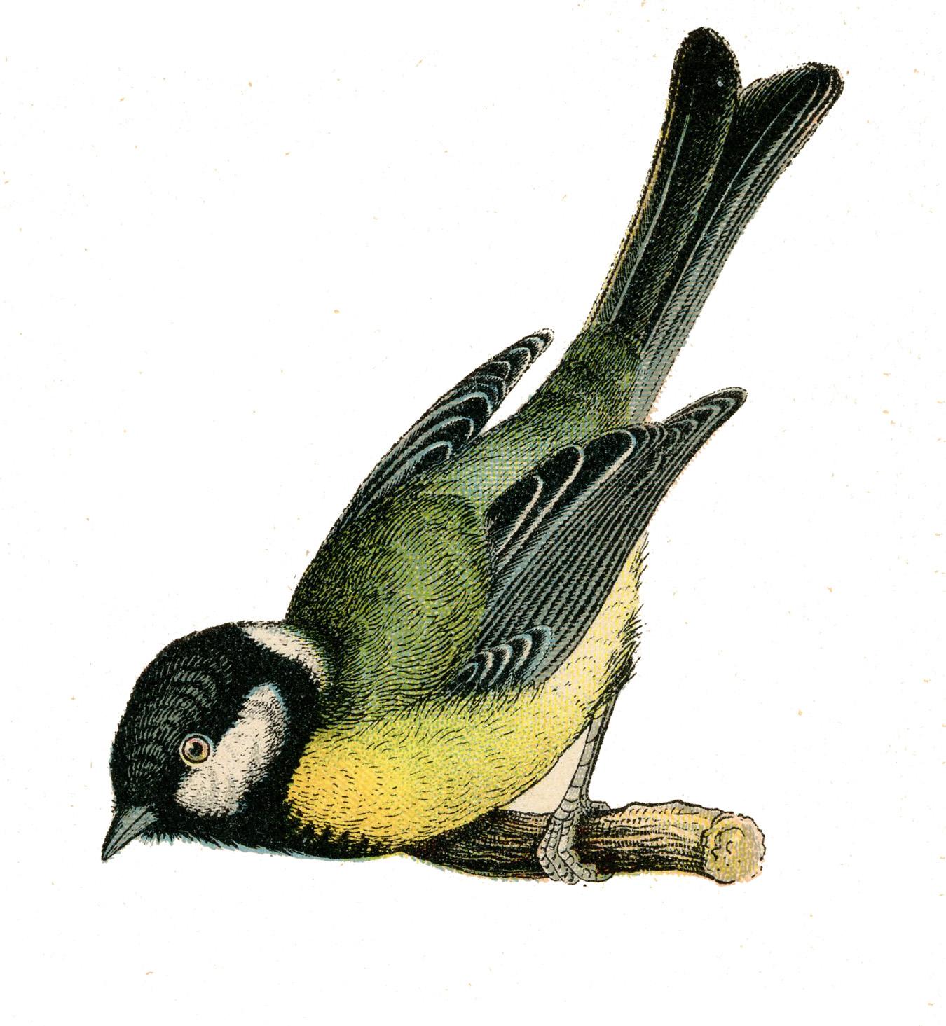 Clip art pretty on. Bird clipart vintage