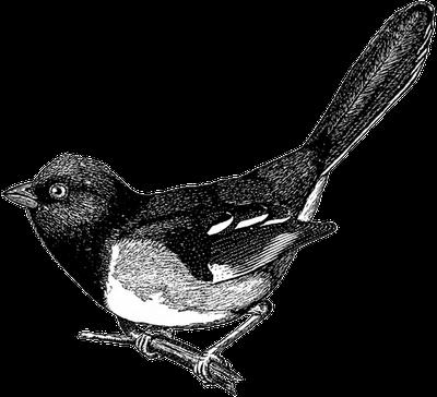 free b w. Bird clipart vintage