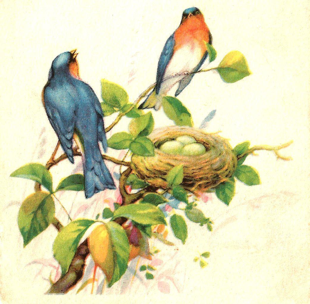 Bird clipart vintage. Antique images free clip