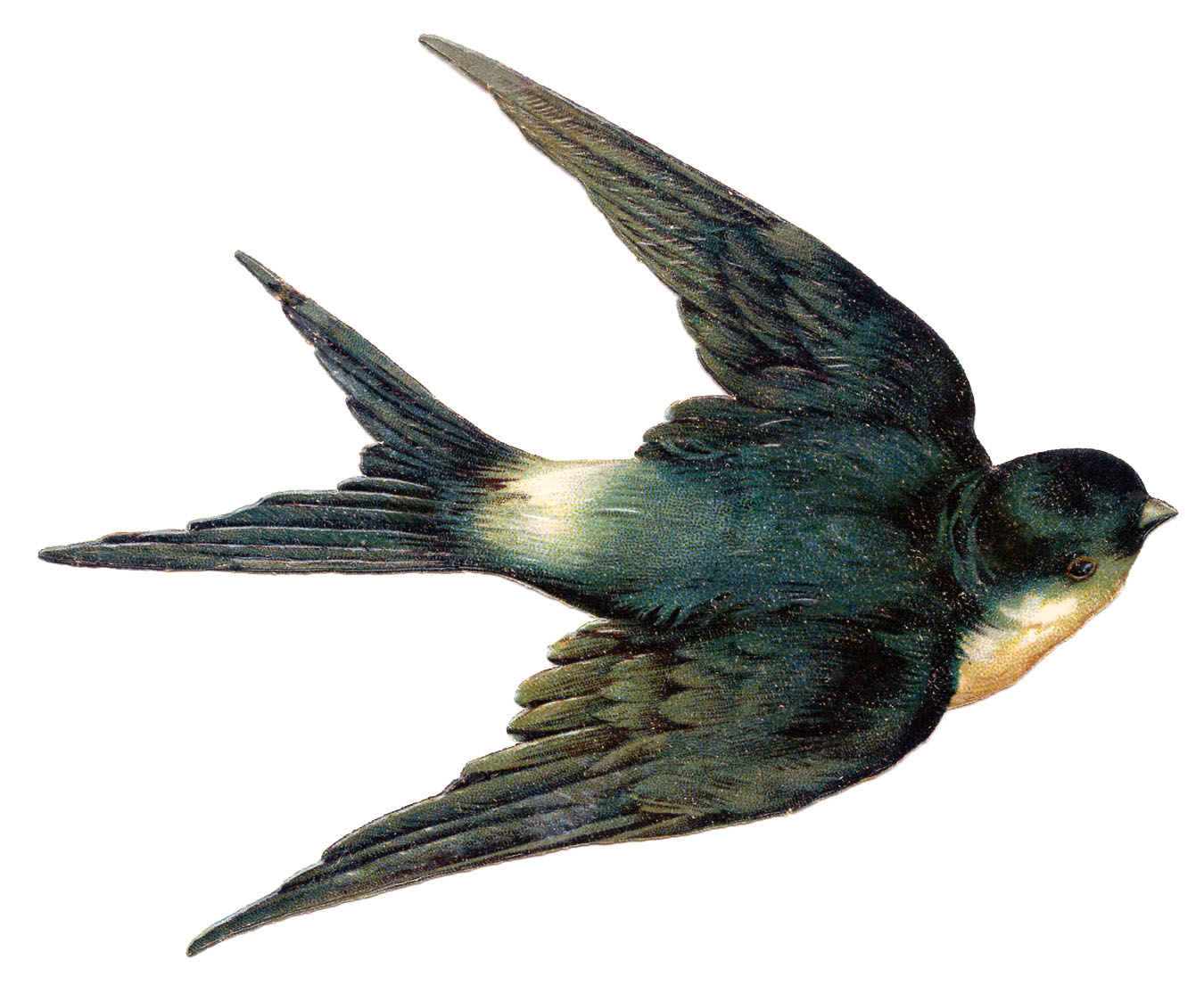 Bird clipart vintage. Clip art best swallow