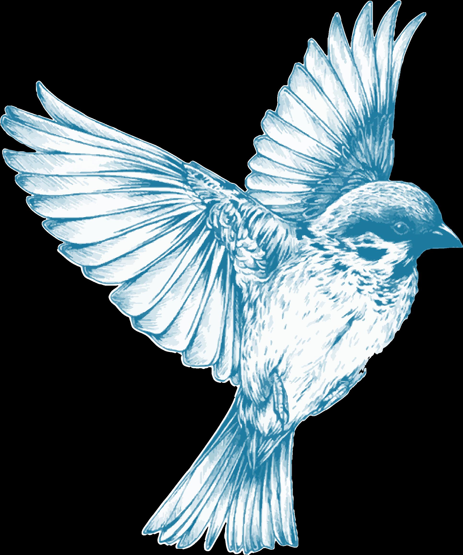 Blue big image png. Bird clipart vintage