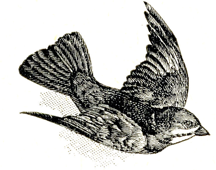 Bird clipart vintage. Free clip art dictionary