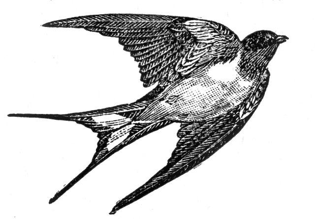 Clip art old dictionary. Bird clipart vintage