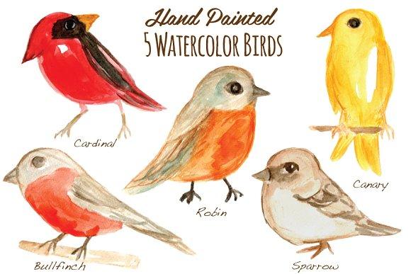 Handpainted illustrations creative market. Birds clipart watercolor