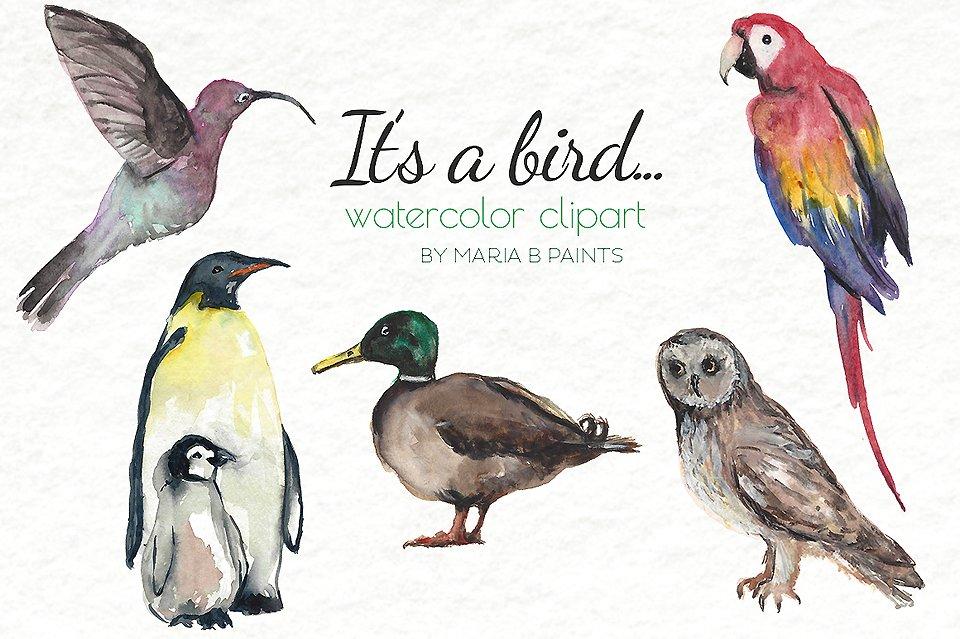 Clip art illustrations creative. Birds clipart watercolor