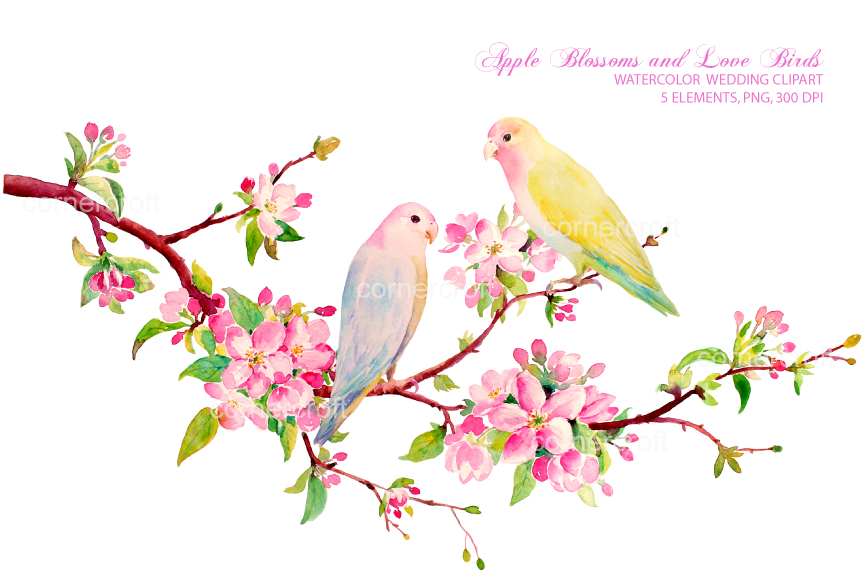 Apple blossom love by. Birds clipart watercolor