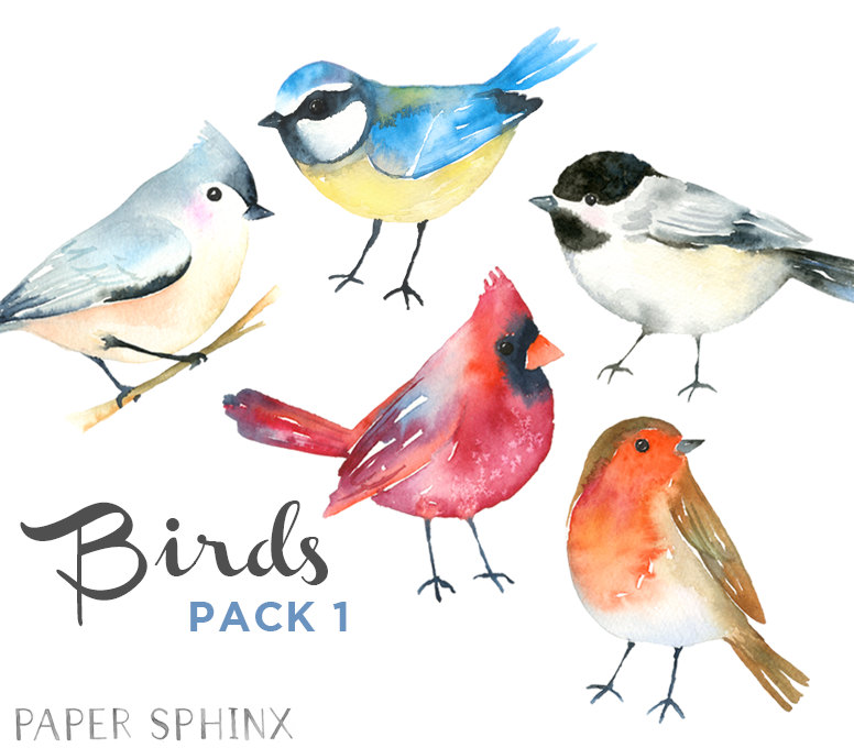 Birds clipart watercolor. Winter woodland