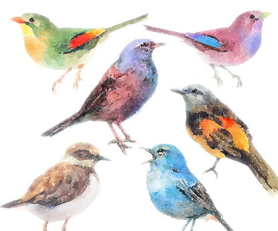 Birds clipart watercolor. Set clip art of
