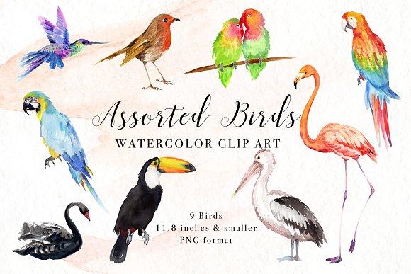 Assorted clip art illustrations. Birds clipart watercolor