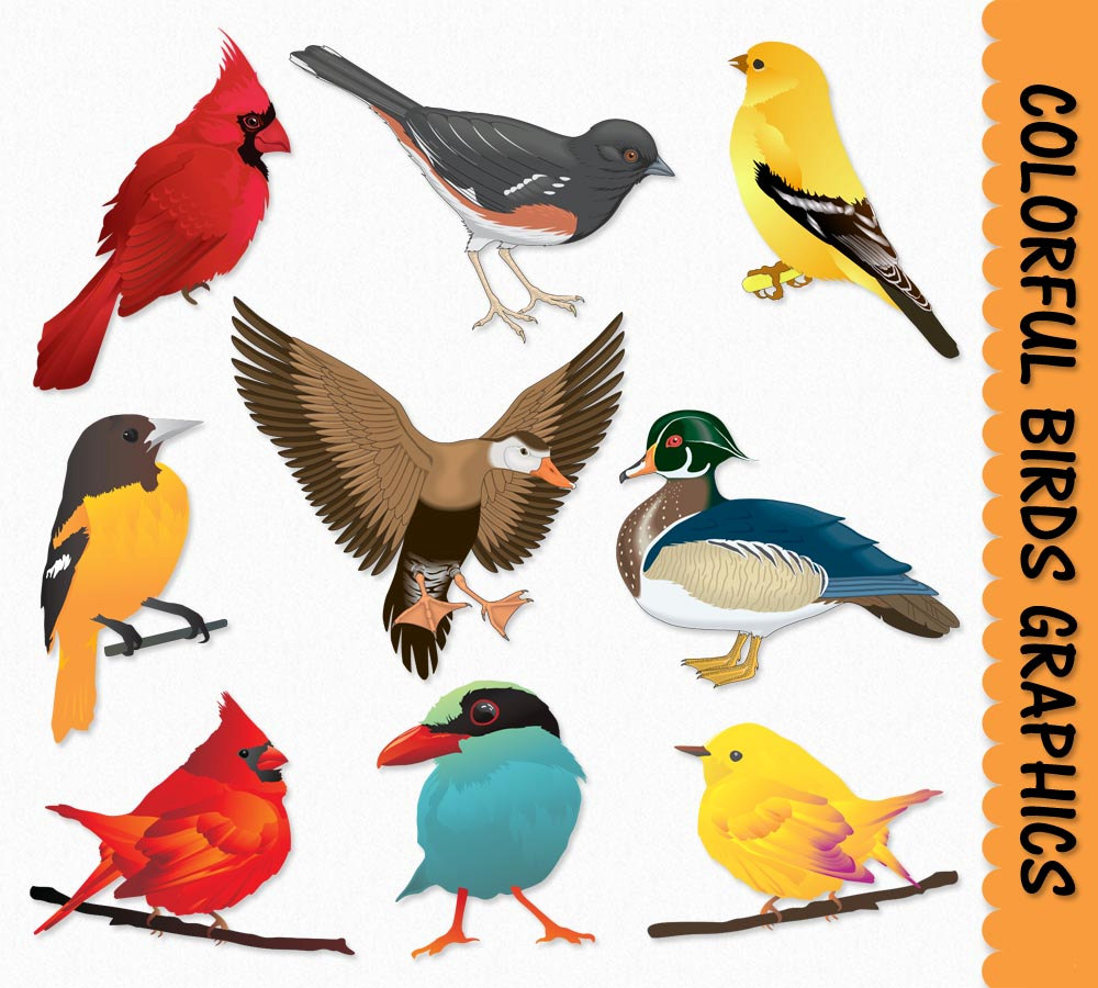 Birds clipart. Clip art graphics bird