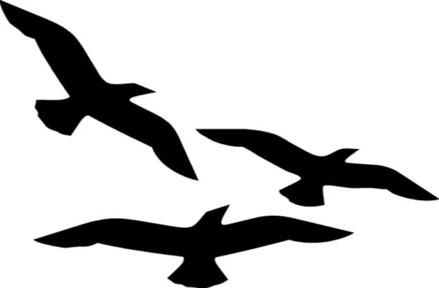 Flying png station . Birds clipart basic