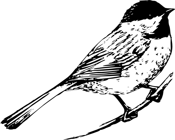 Cardinal clipart kingston. Black and white pictures