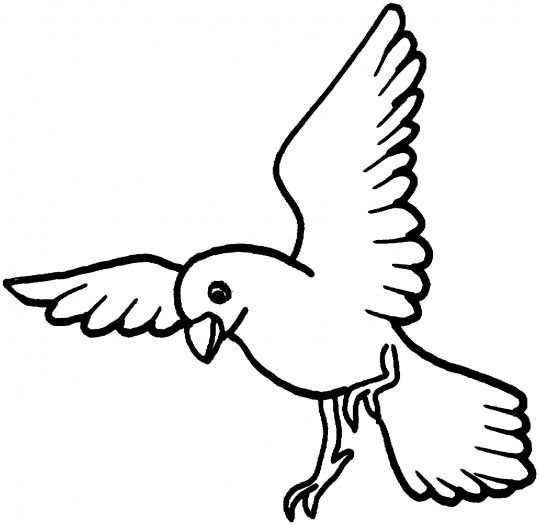 Bird clipart coloring. Drawing of dove best