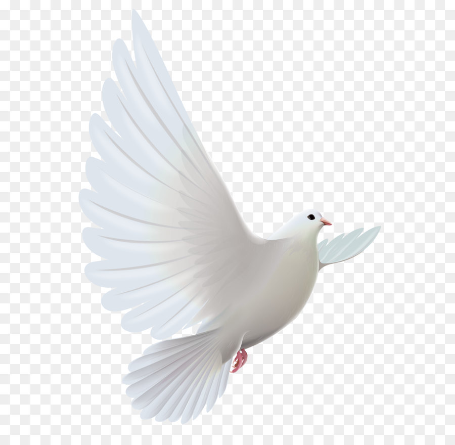 Birds clipart dove. Pigeons and doves bird