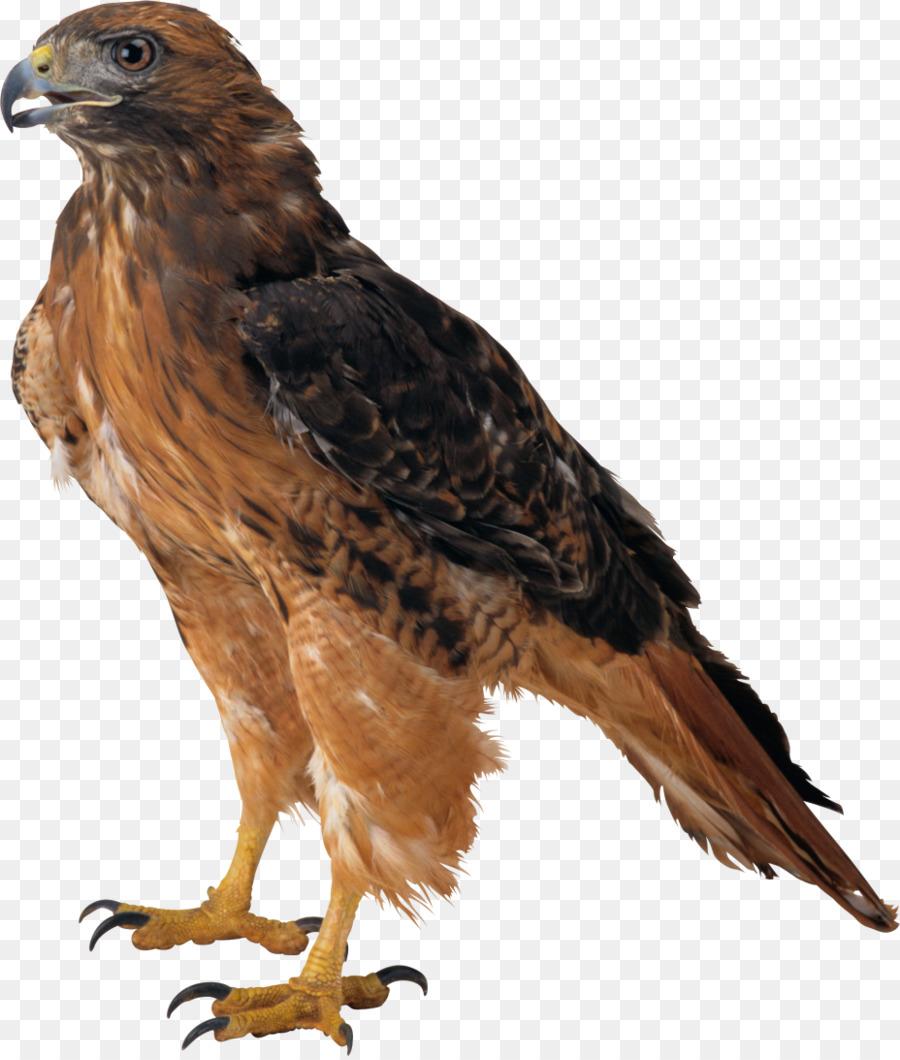 Eagle clip art atlanta. Birds clipart falcons