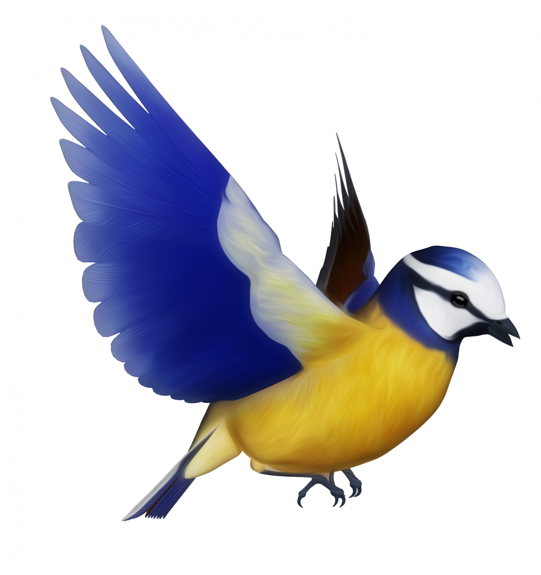 Bird clipart. Blue tit free stock