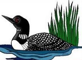 Prospect park sightings north. Bird clipart loon