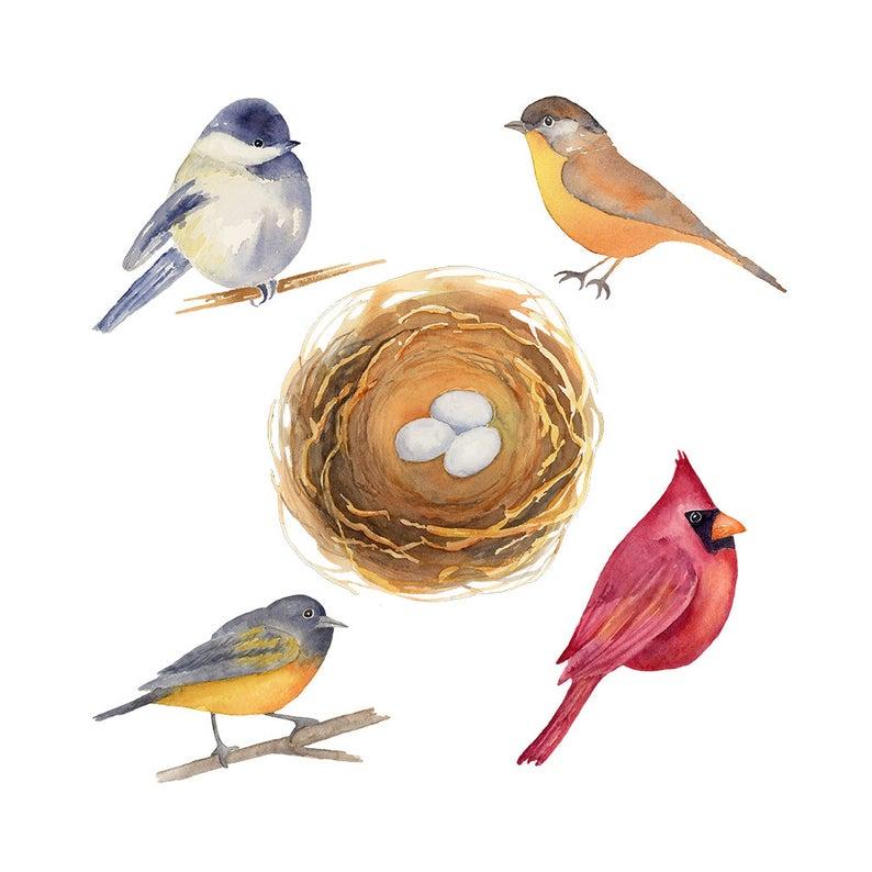 Birds clipart mail. Watercolor chickadee cardinal bird