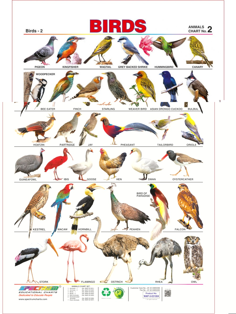 Birds clipart name. Images with transitionsfv spectrum