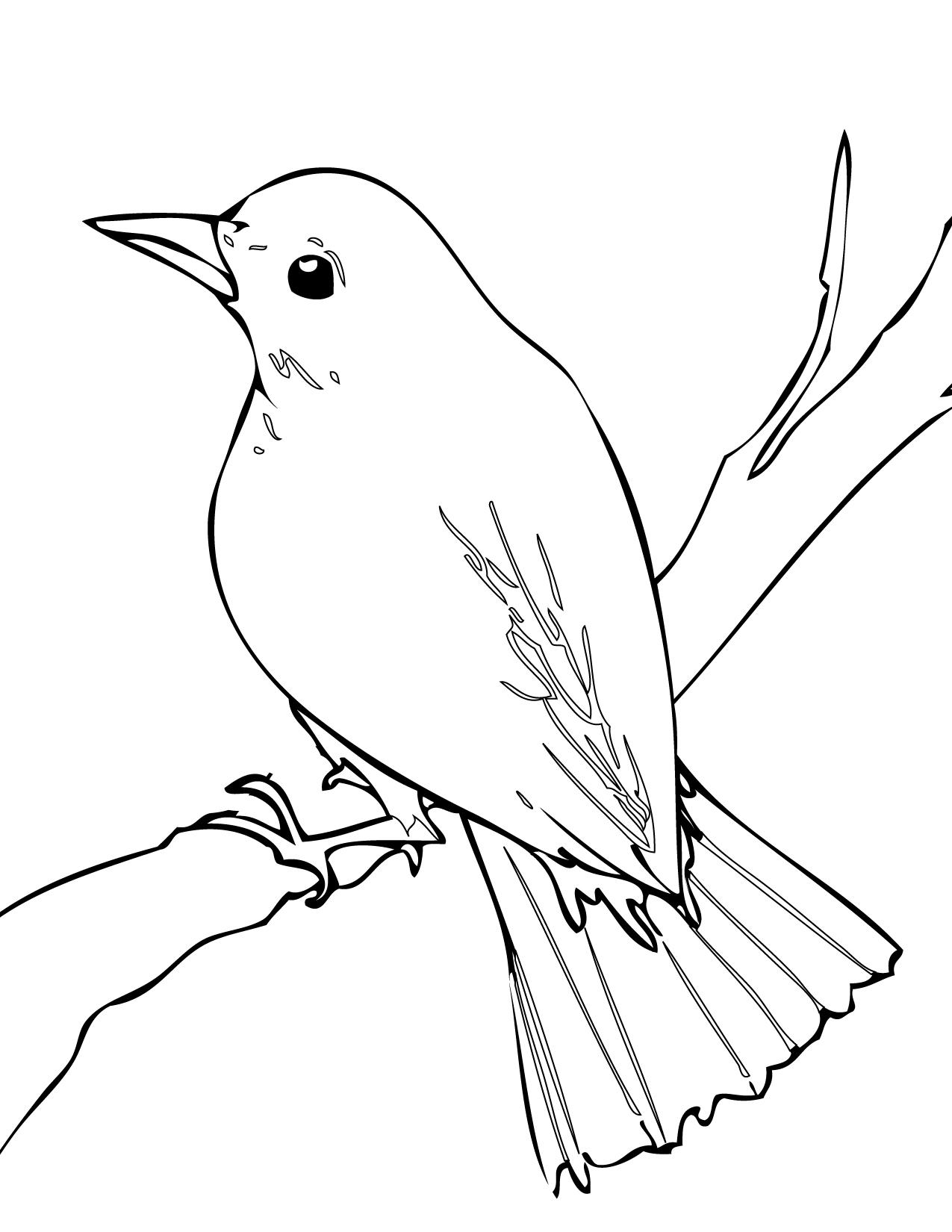 Birds clipart nightingale. Bird clip art library