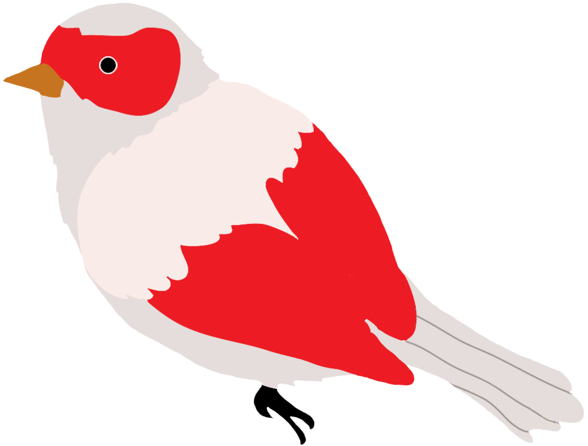 Colorful drawings of birds. Couple clipart bird