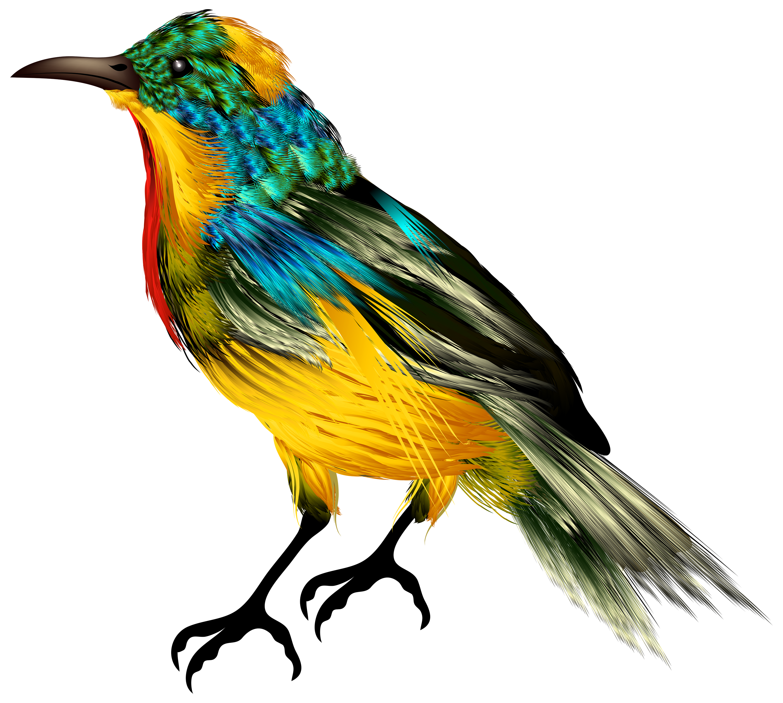 Gem clipart colourful. Bird png best web