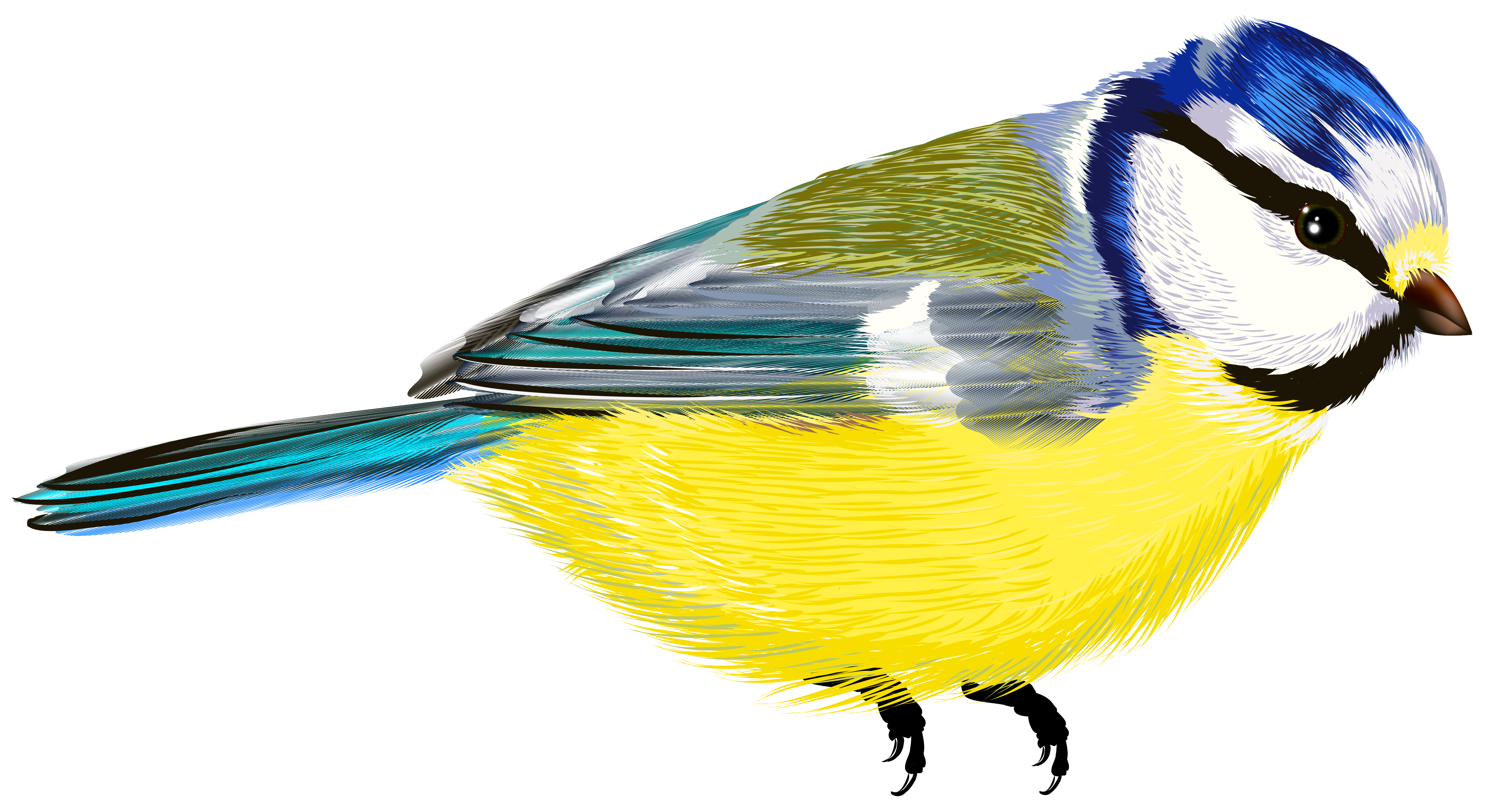 Birds clipart transparent background. Bird png gallery yopriceville