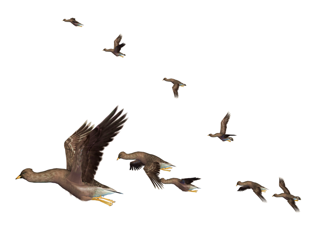 Water clipart sky. Flying bird png images