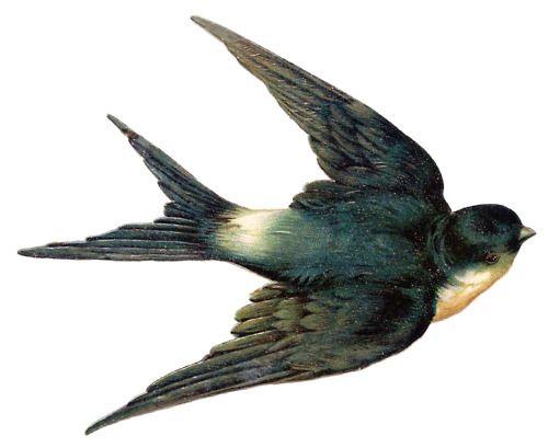 Victorian era scrap bird. Birds clipart vintage