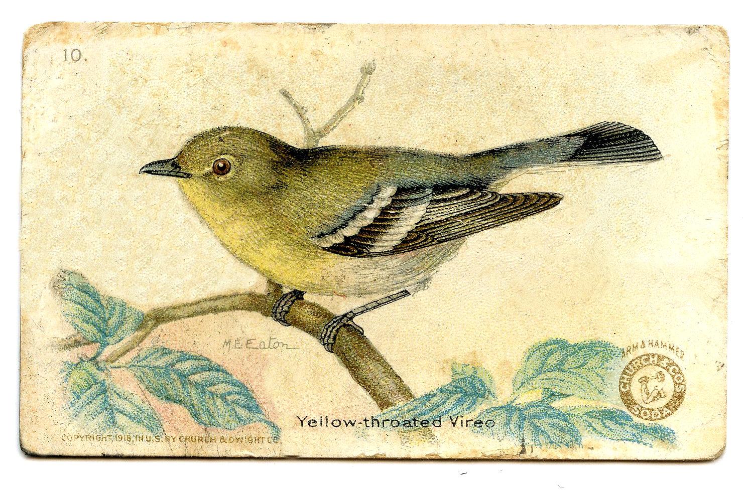 Free . Birds clipart vintage