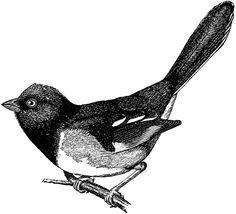 Birds clipart vintage.  best free bird