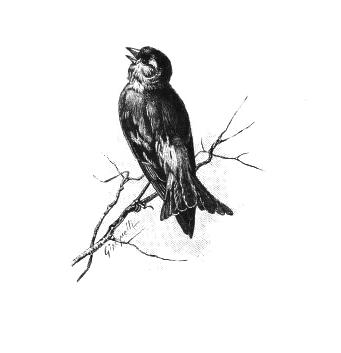 Birds archives the graffical. Bird clipart vintage