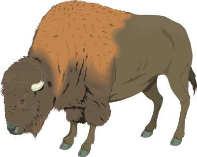 buffalo clipart bison