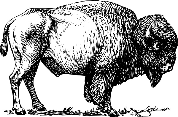 Bison clipart. Clip art free vector