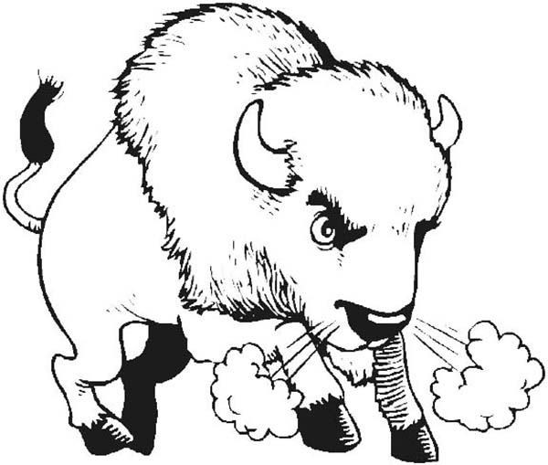 Breath coloring page color. Bison clipart angry