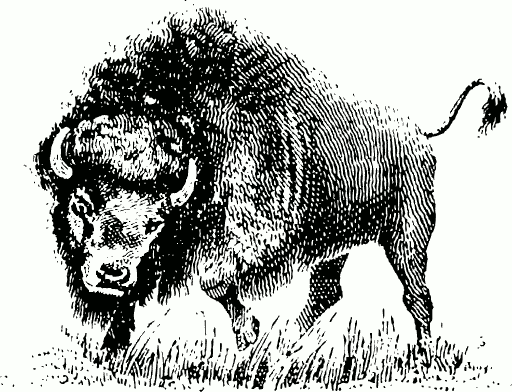Free page of public. Bison clipart black and white