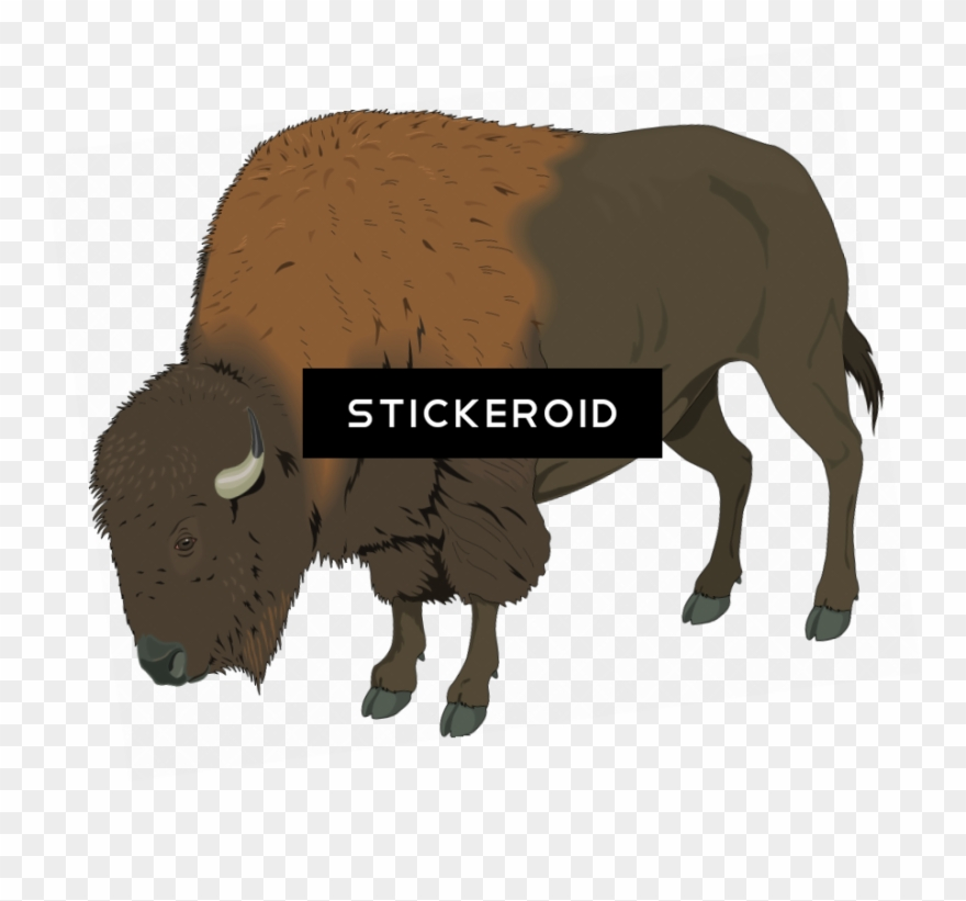 Animals buffalo clip art. Bison clipart bufallo