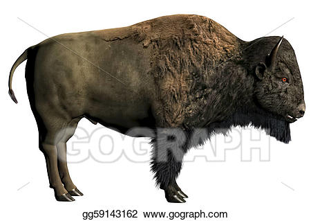 Bison clipart buffalo animal. Drawings american stock illustration