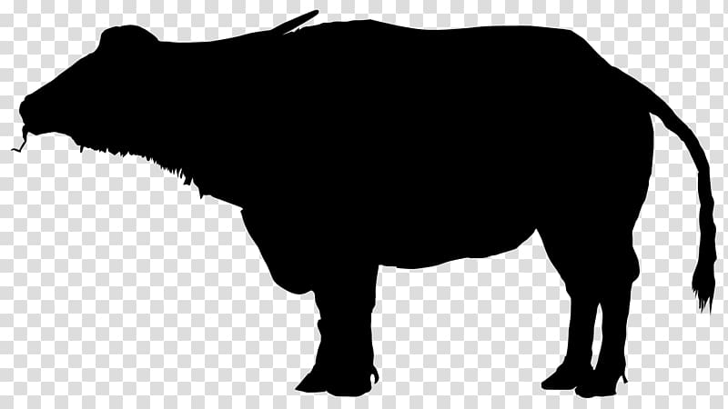 Water silhouette transparent background. Bison clipart buffalo animal