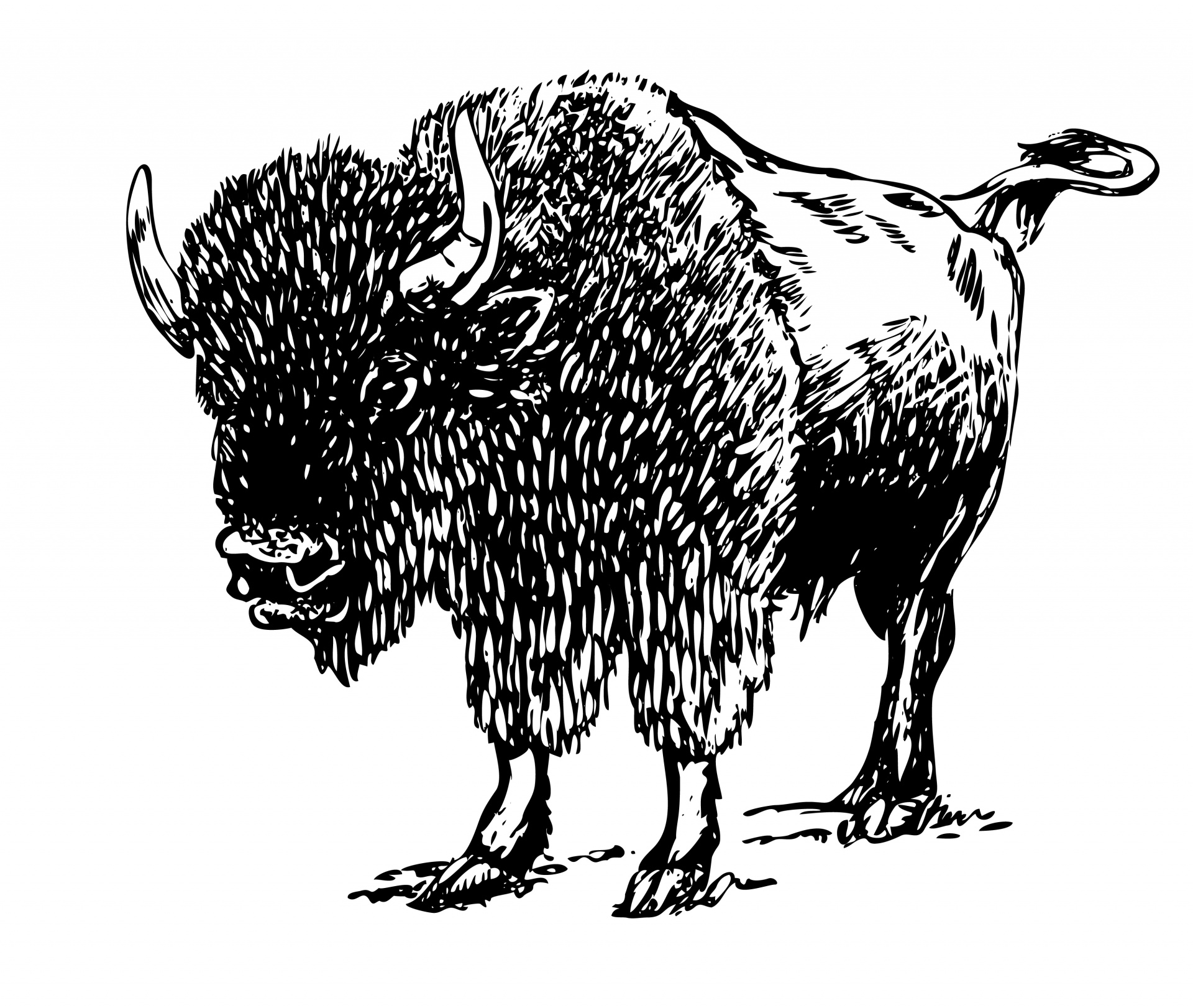 Illustration free stock photo. Bison clipart clip art