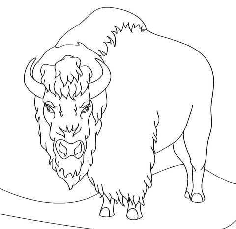 Bison clipart coloring page. Angry free printable pages
