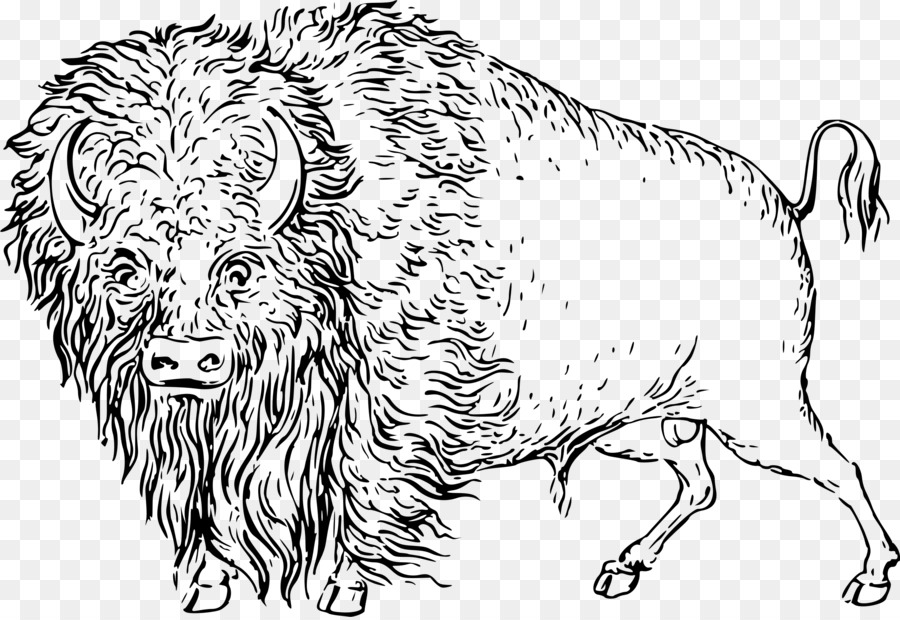 Bison clipart drawing. Cattle line art clip