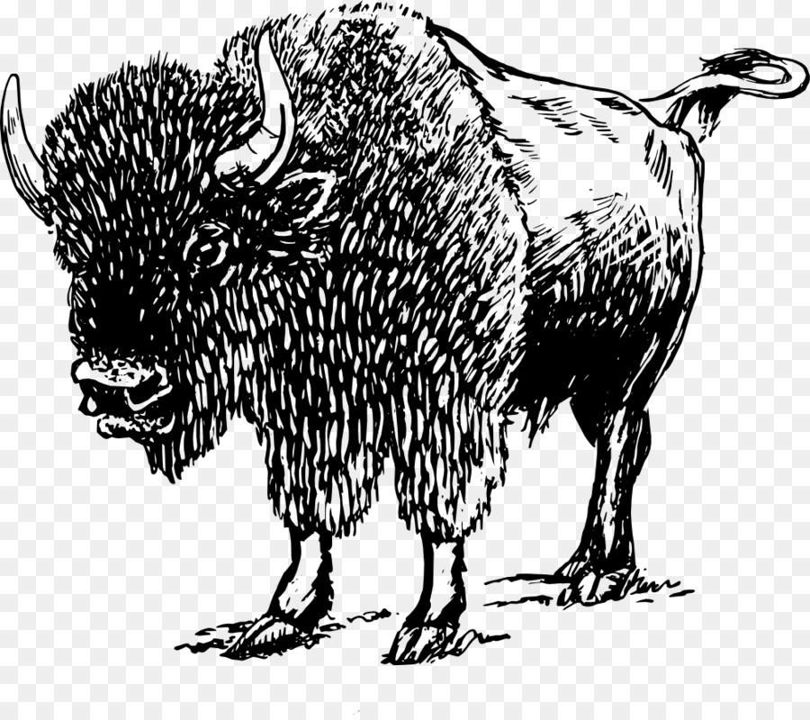 Bison clipart drawing. American clip art recienergy