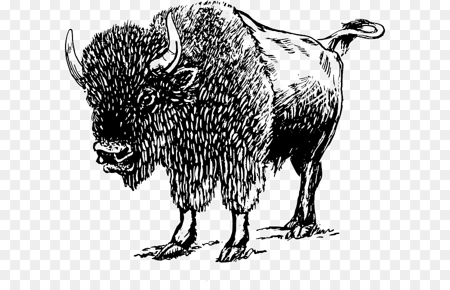 Of family png download. Bison clipart drawing