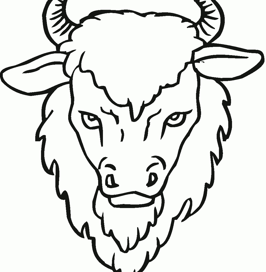 Bison clipart face. New coloring page gallery