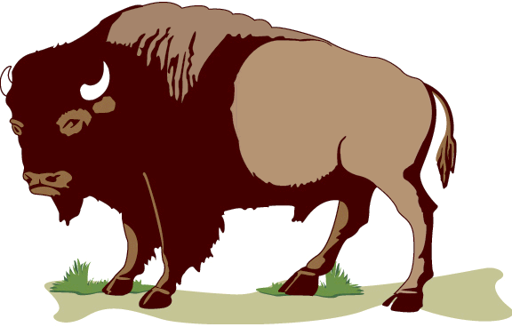 Animl pencil and in. Bison clipart female buffalo